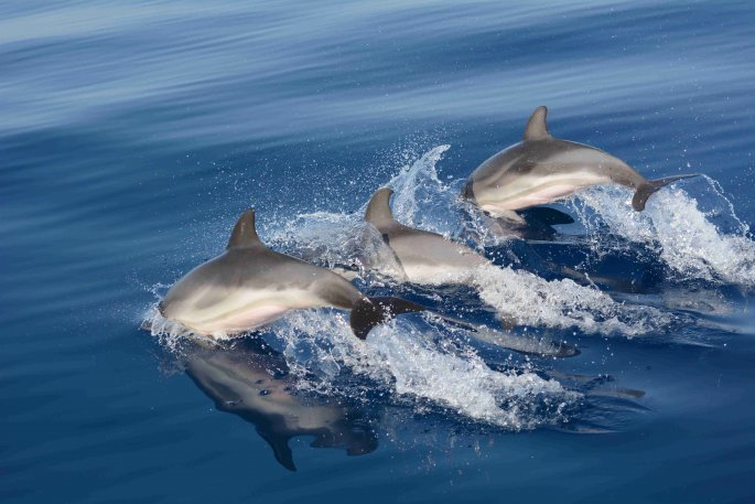 dolphins_photo_niki_pardalou.jpg
