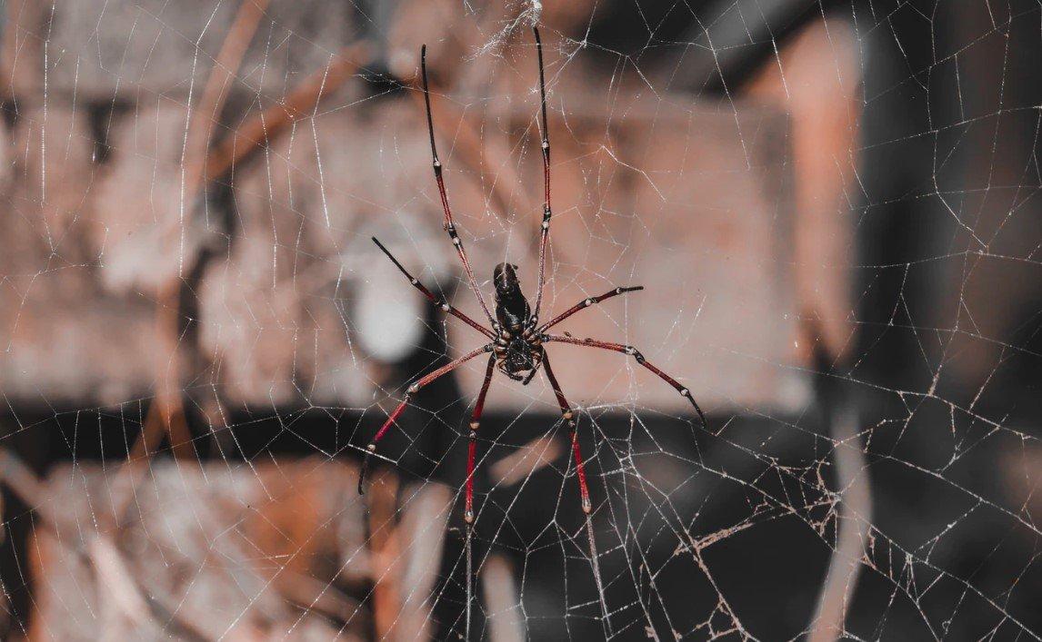 Μαύρη χήρα»: Όλη η αλήθεια για την αράχνη που κόντεψε να σκοτώσει ...